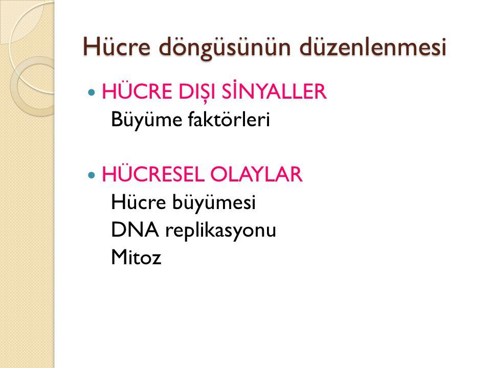 Hücre döngüsünün düzenlenmesi HÜCRE DIŞI S İ NYALLER Büyüme faktörleri HÜCRESEL OLAYLAR Hücre büyümesi DNA replikasyonu Mitoz