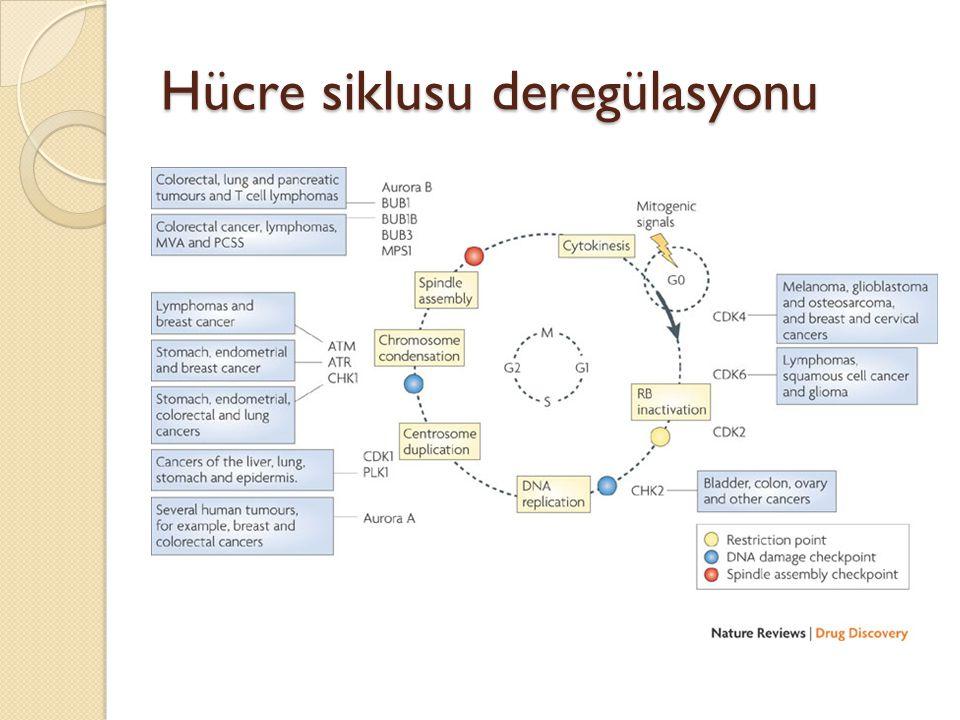 Hücre siklusu deregülasyonu