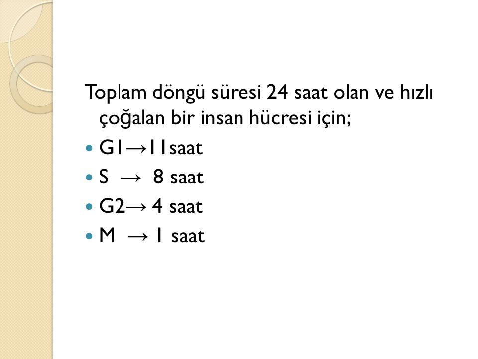 Toplam döngü süresi 24 saat olan ve hızlı ço ğ alan bir insan hücresi için; G1 → 11saat S → 8 saat G2 → 4 saat M → 1 saat