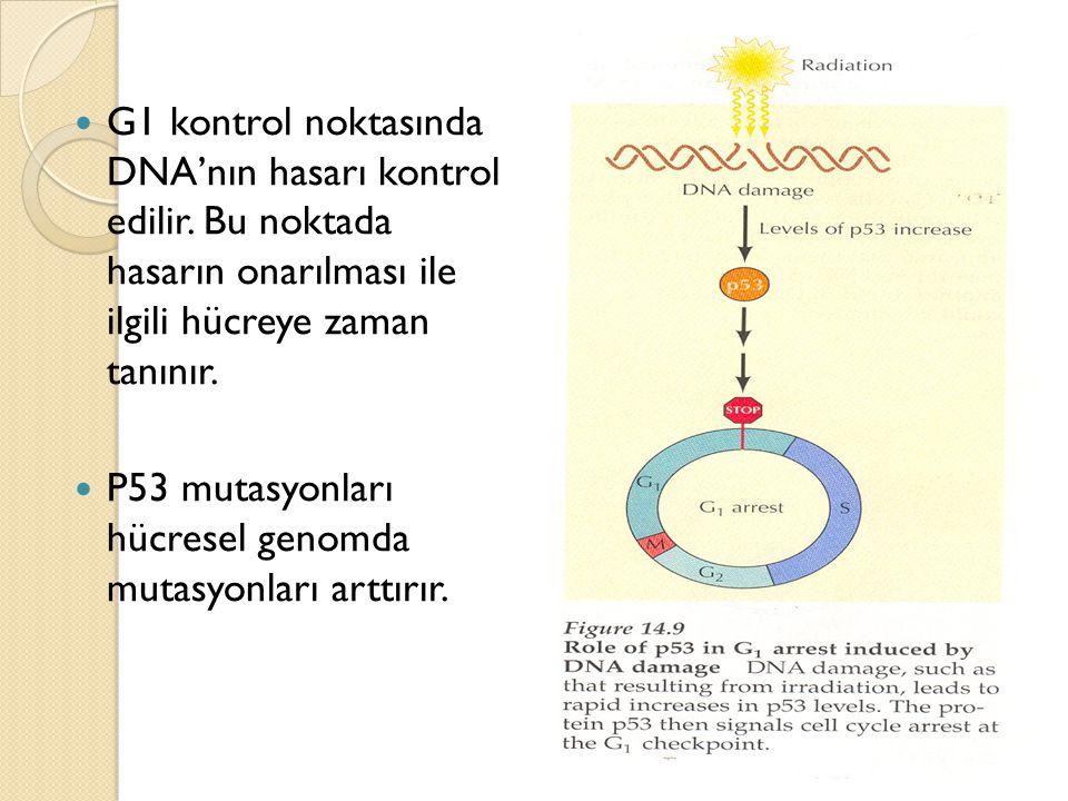 G1 kontrol noktasında DNA'nın hasarı kontrol edilir. Bu noktada hasarın onarılması ile ilgili hücreye zaman tanınır. P53 mutasyonları hücresel genomda