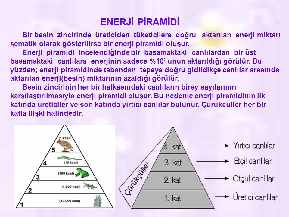 ENERJİ PİRAMİDİ Bir besin zincirinde üreticiden tüketicilere doğru aktarılan enerji miktarı şematik olarak gösterilirse bir enerji piramidi oluşur. En