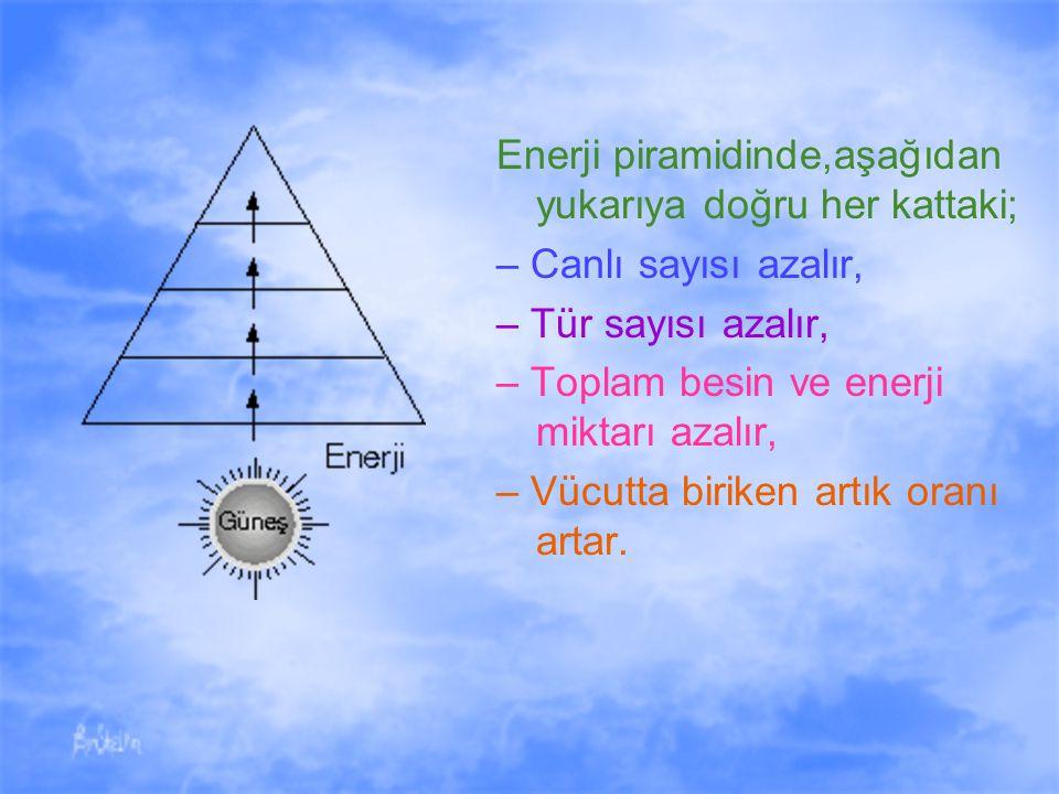 Enerji piramidinde,aşağıdan yukarıya doğru her kattaki; – Canlı sayısı azalır, – Tür sayısı azalır, – Toplam besin ve enerji miktarı azalır, – Vücutta biriken artık oranı artar.