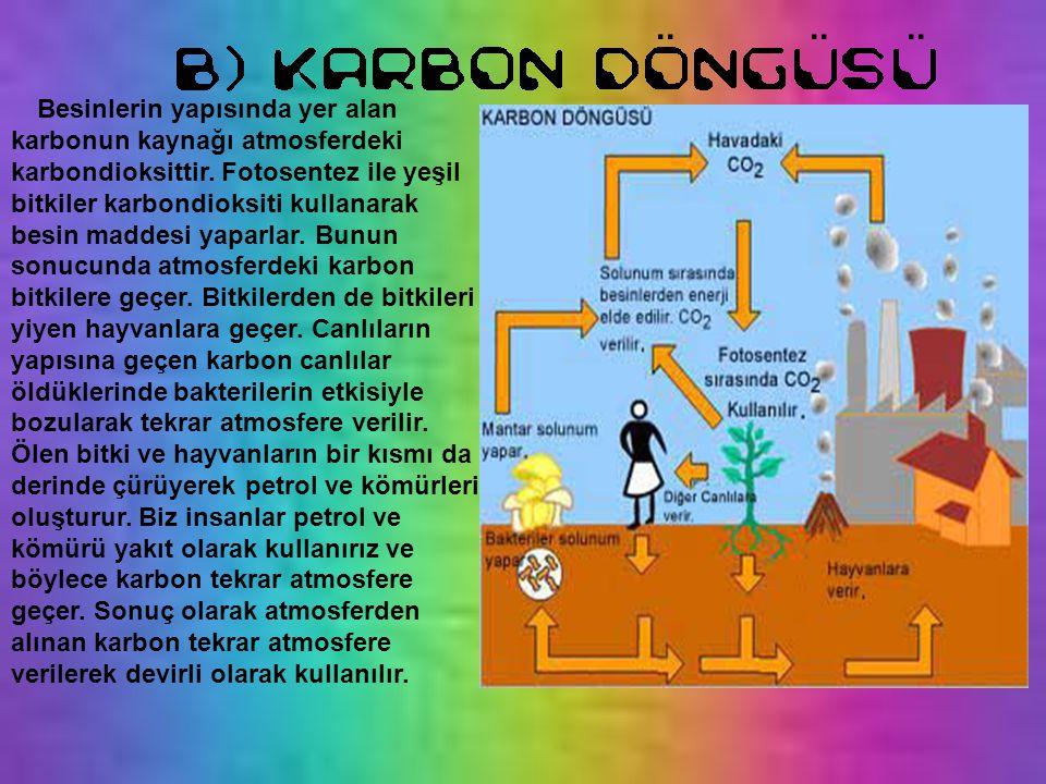Besinlerin yapısında yer alan karbonun kaynağı atmosferdeki karbondioksittir. Fotosentez ile yeşil bitkiler karbondioksiti kullanarak besin maddesi ya