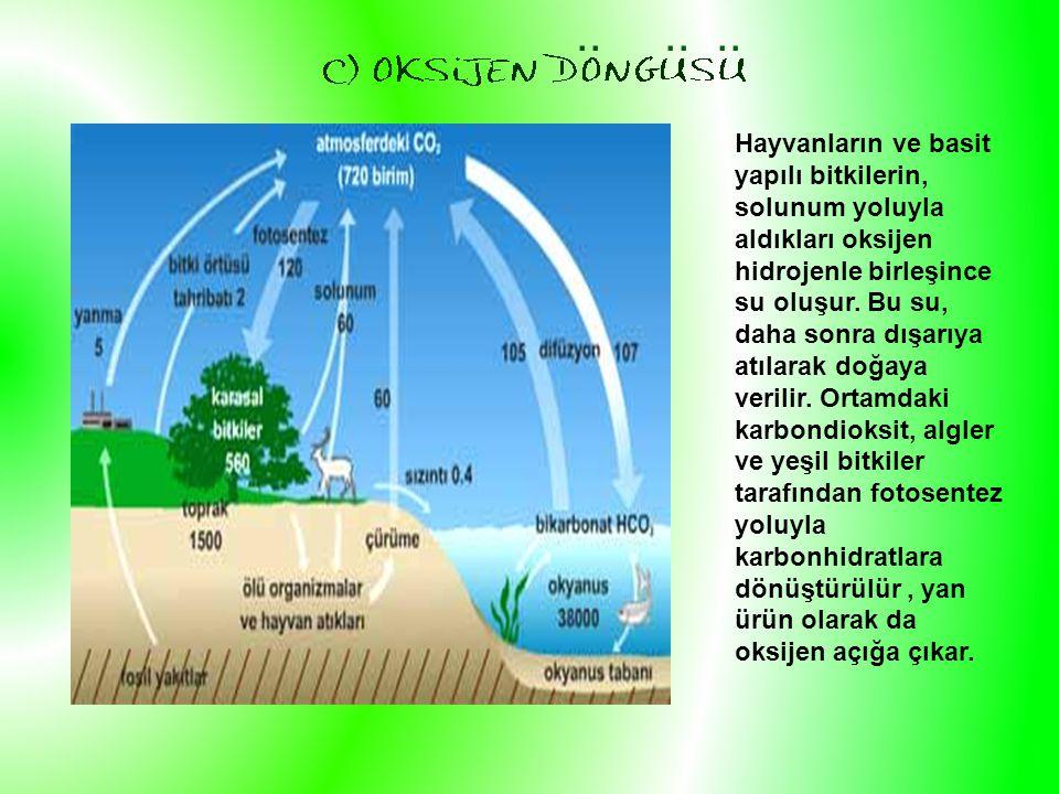 Hayvanların ve basit yapılı bitkilerin, solunum yoluyla aldıkları oksijen hidrojenle birleşince su oluşur.