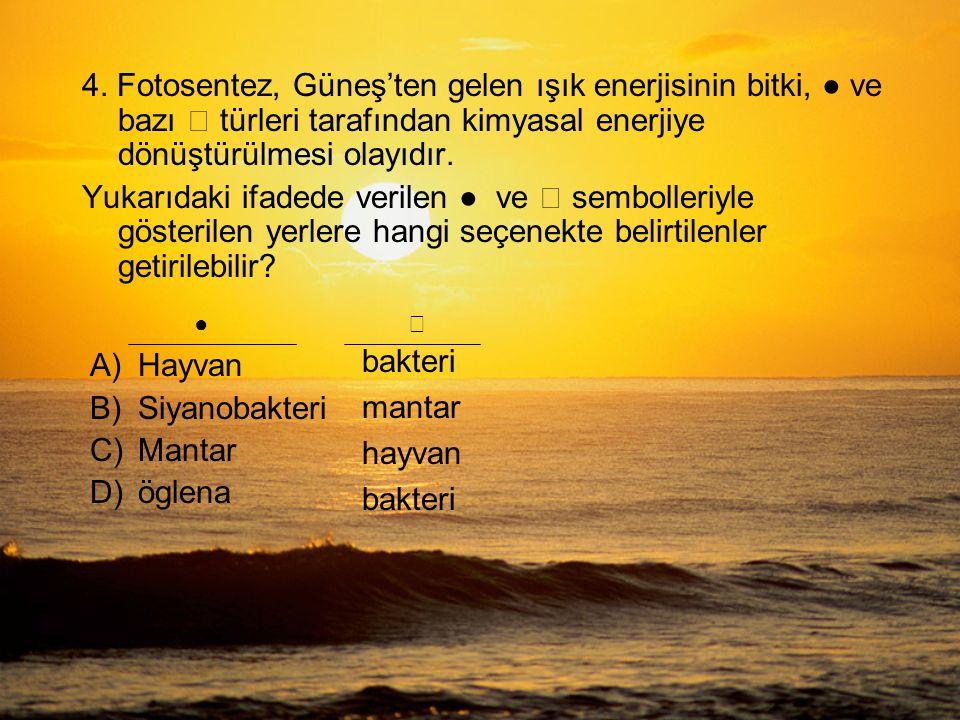 A)Hayvan B)Siyanobakteri C)Mantar D)öglena 4.
