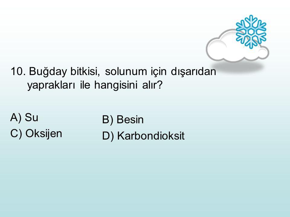 10. Buğday bitkisi, solunum için dışarıdan yaprakları ile hangisini alır? A) Su C) Oksijen B) Besin D) Karbondioksit