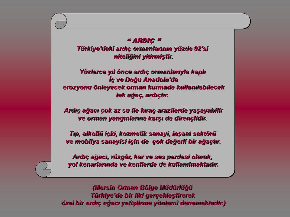 sevgi.anne@mynet.com grafik-düzenleme e.nurhan köroğlu Bu anlamlı öykünün yazarı Dr.Mehmet UHRİ'ye teşekkürler...