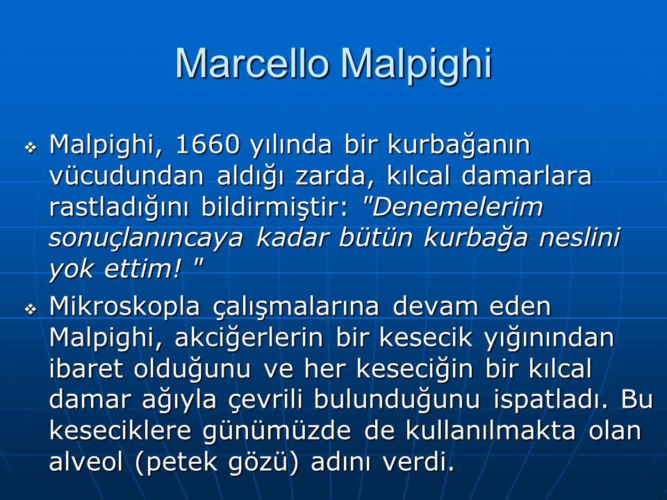 Marcello Malpighi  Malpighi, 1660 yılında bir kurbağanın vücudundan aldığı zarda, kılcal damarlara rastladığını bildirmiştir: