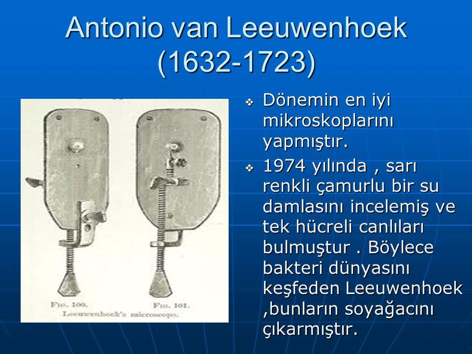 Antonio van Leeuwenhoek (1632-1723)  Dönemin en iyi mikroskoplarını yapmıştır.  1974 yılında, sarı renkli çamurlu bir su damlasını incelemiş ve tek
