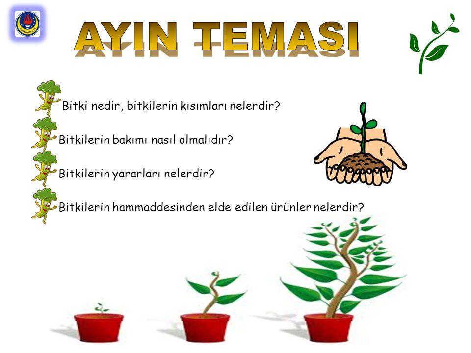 Bitki nedir, bitkilerin kısımları nelerdir? Bitkilerin bakımı nasıl olmalıdır? Bitkilerin yararları nelerdir? Bitkilerin hammaddesinden elde edilen ür