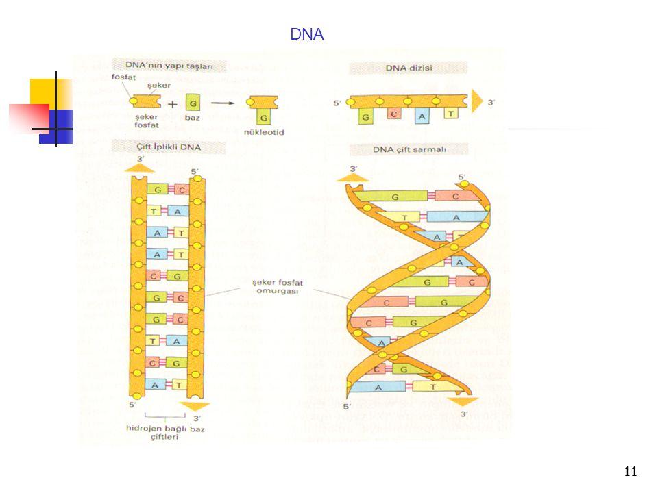 11 DNA