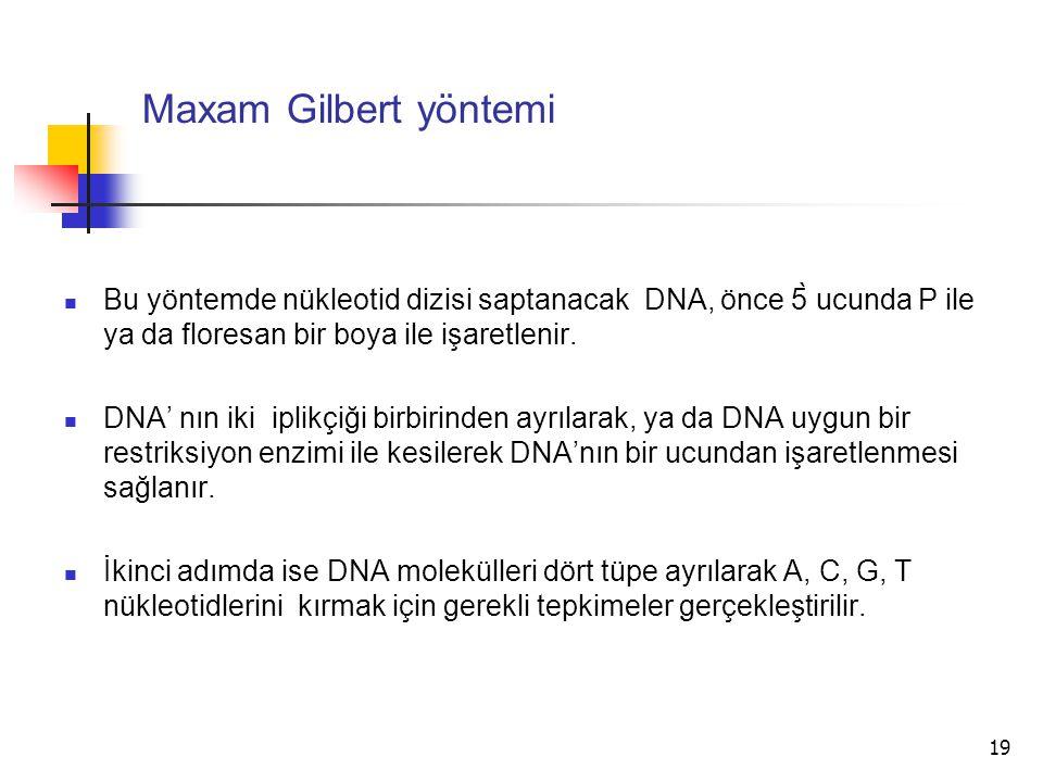 19 Maxam Gilbert yöntemi Bu yöntemde nükleotid dizisi saptanacak DNA, önce 5̀ ucunda P ile ya da floresan bir boya ile işaretlenir. DNA' nın iki iplik