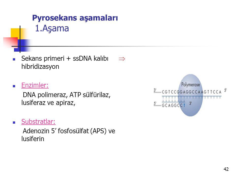42 Pyrosekans aşamaları 1.Aşama Sekans primeri + ssDNA kalıbı  hibridizasyon Enzimler: DNA polimeraz, ATP sülfürilaz, lusiferaz ve apiraz, Substratla