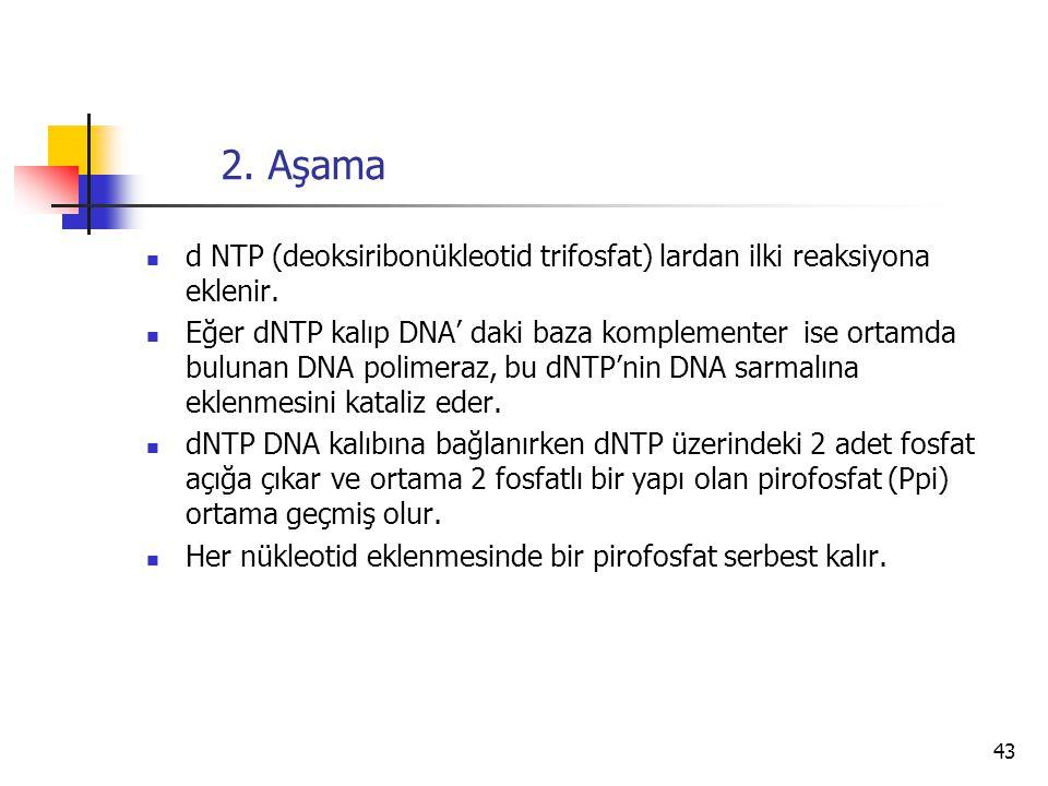 43 2. Aşama d NTP (deoksiribonükleotid trifosfat) lardan ilki reaksiyona eklenir. Eğer dNTP kalıp DNA' daki baza komplementer ise ortamda bulunan DNA