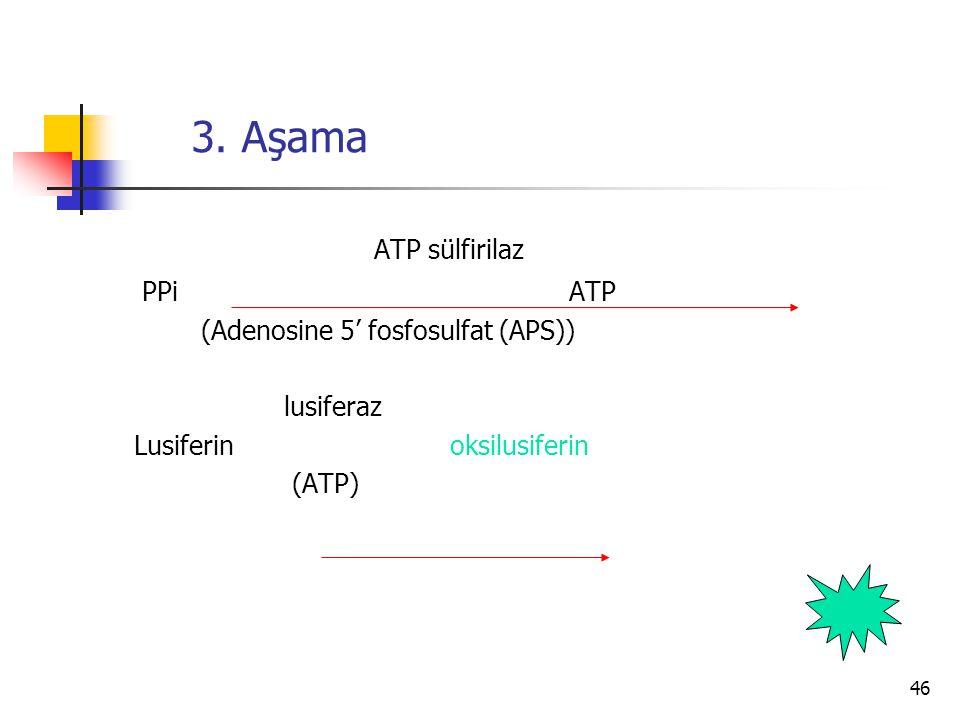 46 3. Aşama ATP sülfirilaz PPi ATP (Adenosine 5' fosfosulfat (APS)) lusiferaz Lusiferin oksilusiferin (ATP)