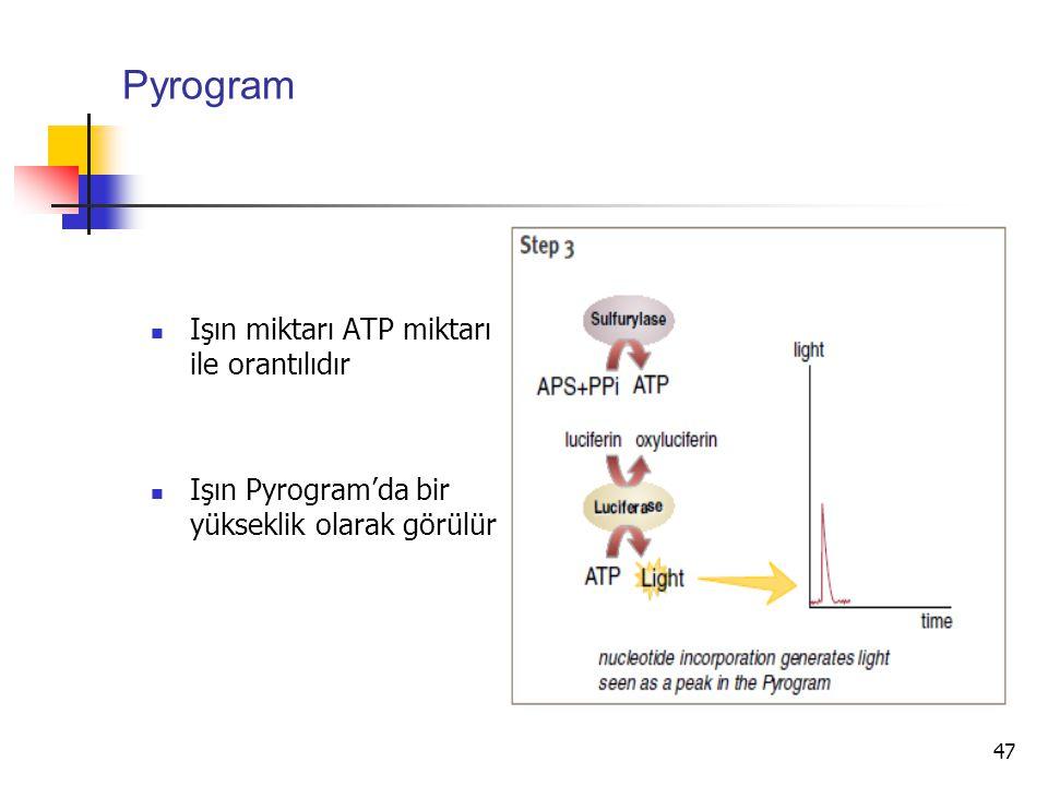 47 Pyrogram Işın miktarı ATP miktarı ile orantılıdır Işın Pyrogram'da bir yükseklik olarak görülür