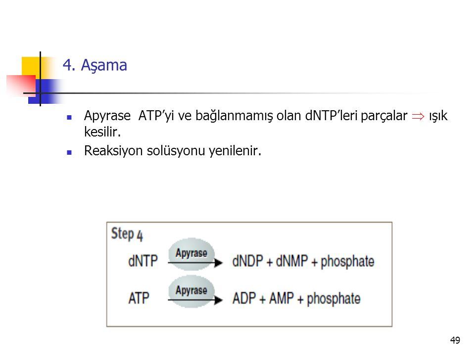49 4. Aşama Apyrase ATP'yi ve bağlanmamış olan dNTP'leri parçalar  ışık kesilir. Reaksiyon solüsyonu yenilenir.