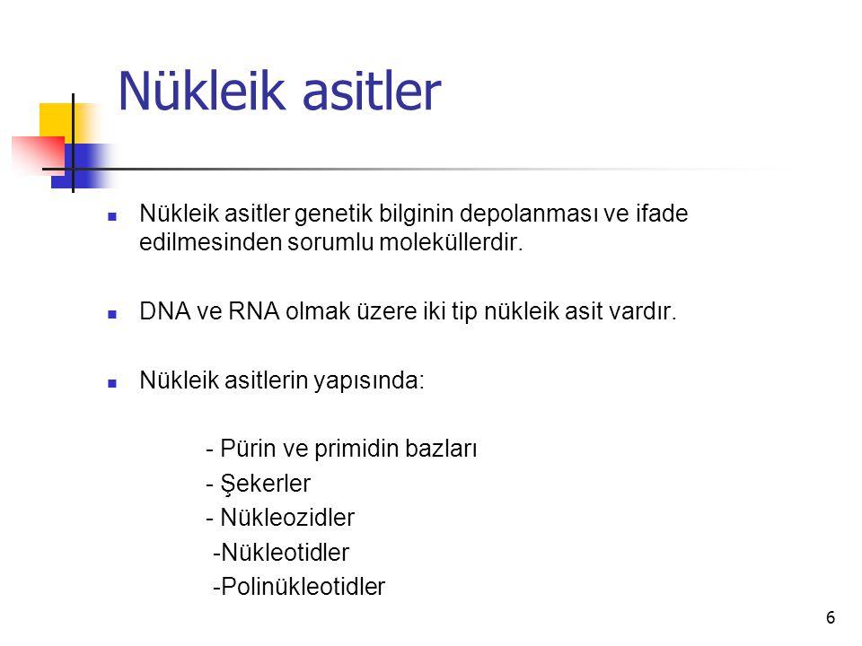 6 Nükleik asitler Nükleik asitler genetik bilginin depolanması ve ifade edilmesinden sorumlu moleküllerdir. DNA ve RNA olmak üzere iki tip nükleik asi