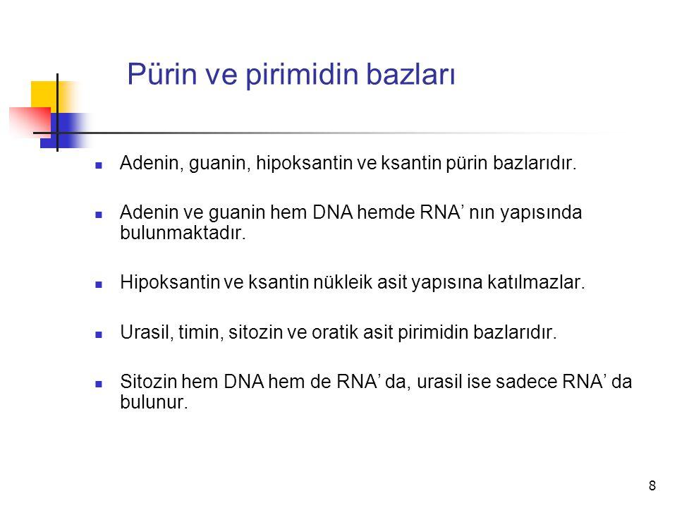 8 Pürin ve pirimidin bazları Adenin, guanin, hipoksantin ve ksantin pürin bazlarıdır. Adenin ve guanin hem DNA hemde RNA' nın yapısında bulunmaktadır.
