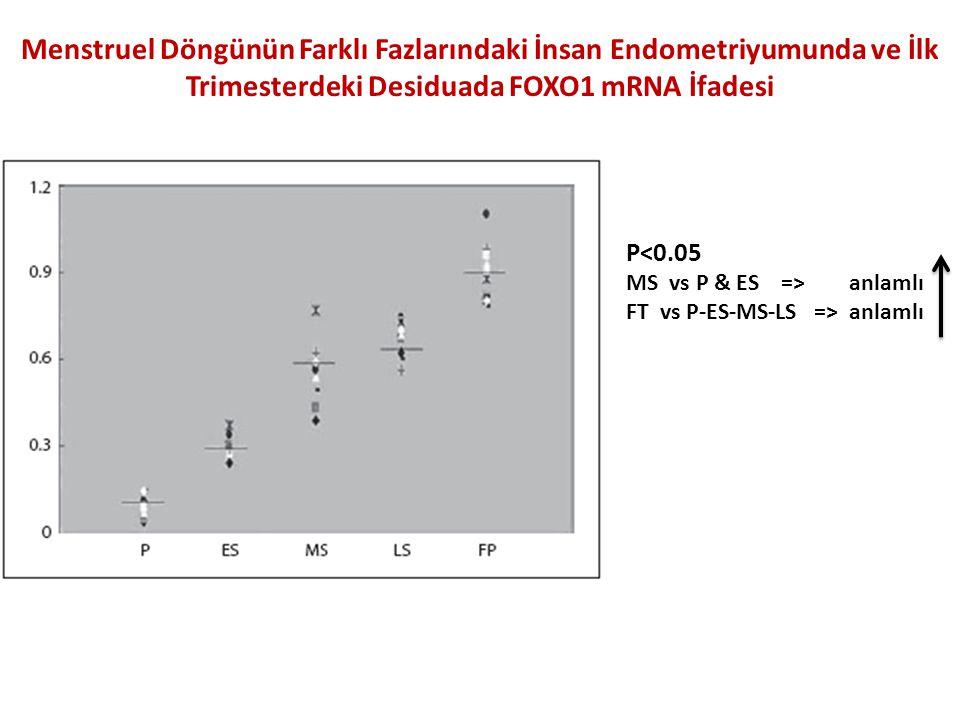 Menstruel Döngünün Farklı Fazlarındaki İnsan Endometriyumunda ve İlk Trimesterdeki Desiduada FOXO1 mRNA İfadesi P<0.05 MS vs P & ES => anlamlı FT vs P-ES-MS-LS => anlamlı