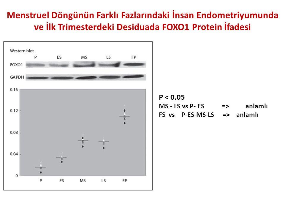 Menstruel Döngünün Farklı Fazlarındaki İnsan Endometriyumunda ve İlk Trimesterdeki Desiduada FOXO1 Protein İfadesi P < 0.05 MS - LS vs P- ES => anlamlı FS vs P-ES-MS-LS => anlamlı