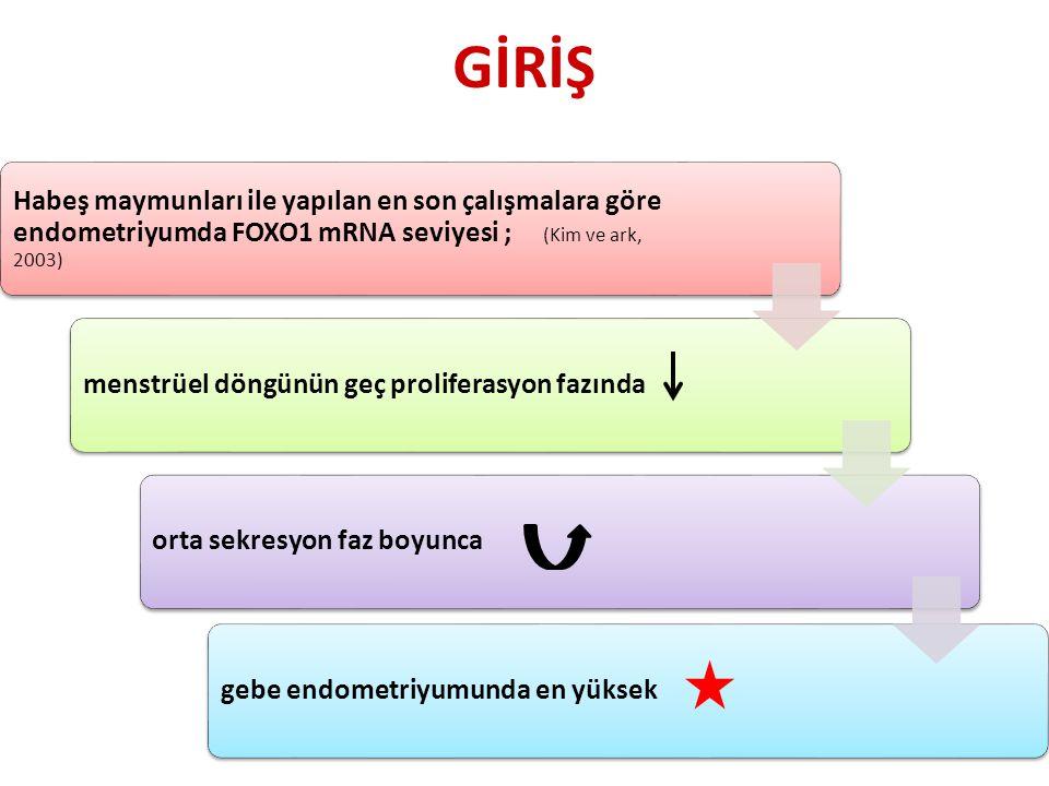 Habeş maymunları ile yapılan en son çalışmalara göre endometriyumda FOXO1 mRNA seviyesi ; (Kim ve ark, 2003) menstrüel döngünün geç proliferasyon fazındaorta sekresyon faz boyuncagebe endometriyumunda en yüksek GİRİŞ