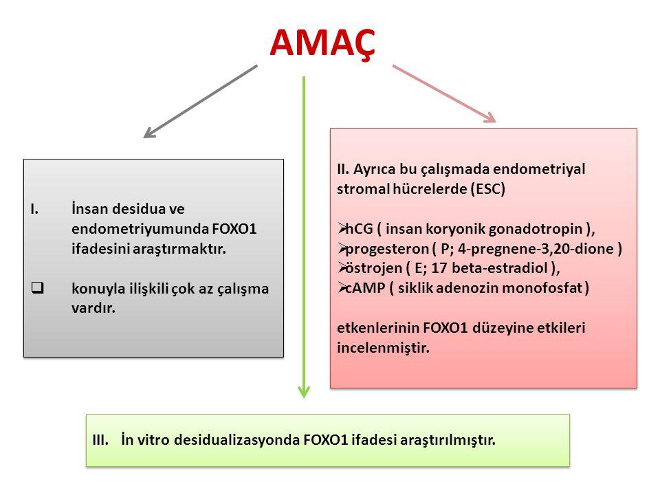 AMAÇ I.İnsan desidua ve endometriyumunda FOXO1 ifadesini araştırmaktır.