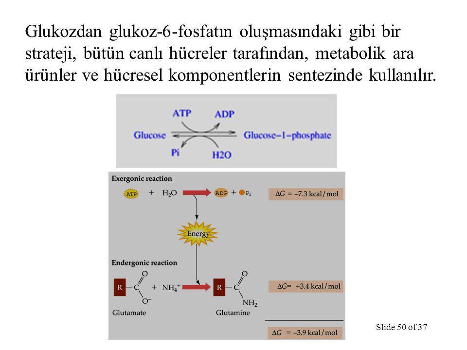 TermodinamikSlide 50 of 37 Glukozdan glukoz-6-fosfatın oluşmasındaki gibi bir strateji, bütün canlı hücreler tarafından, metabolik ara ürünler ve hücresel komponentlerin sentezinde kullanılır.