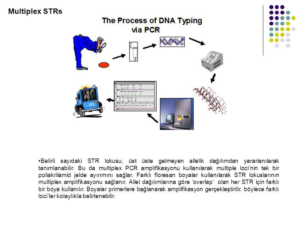 Multiplex STRs Belirli sayıdaki STR lokusu, üst üste gelmeyen allelik dağılımdan yararlanılarak tanımlanabilir.