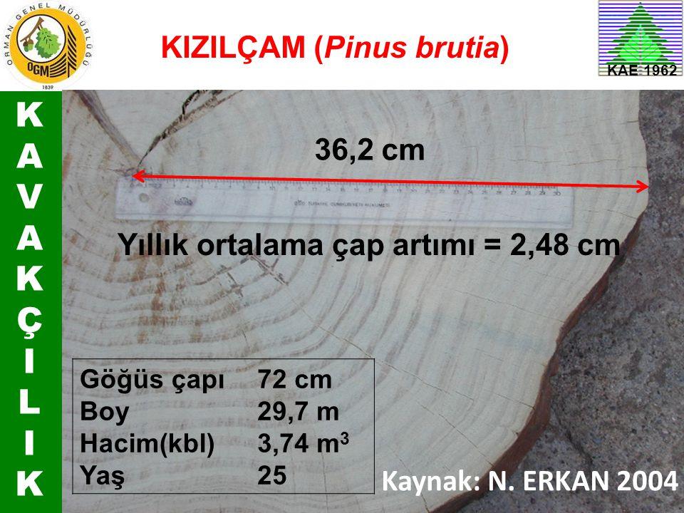 KAVAKÇILIKKAVAKÇILIK KAE 1962 36,2 cm Yıllık ortalama çap artımı = 2,48 cm Göğüs çapı Boy Hacim(kbl) Yaş 72 cm 29,7 m 3,74 m 3 25 KIZILÇAM (Pinus brut
