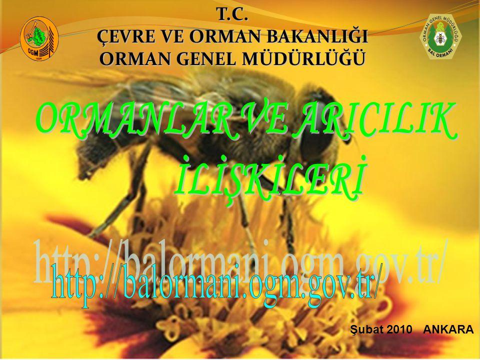 Şubat 2010 ANKARAT.C. ÇEVRE VE ORMAN BAKANLIĞI ORMAN GENEL MÜDÜRLÜĞÜ