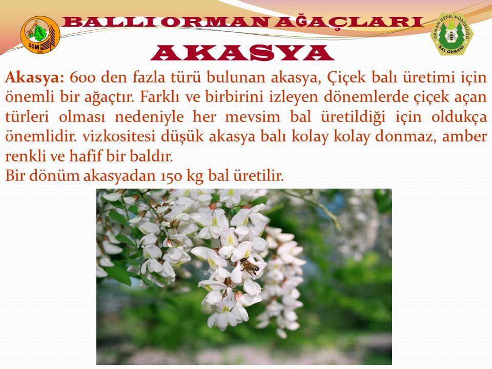 Akasya: 600 den fazla türü bulunan akasya, Çiçek balı üretimi için önemli bir ağaçtır. Farklı ve birbirini izleyen dönemlerde çiçek açan türleri olmas
