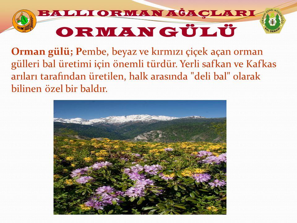 Orman gülü; Pembe, beyaz ve kırmızı çiçek açan orman gülleri bal üretimi için önemli türdür. Yerli safkan ve Kafkas arıları tarafından üretilen, halk
