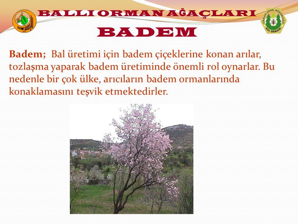 Badem; Bal üretimi için badem çiçeklerine konan arılar, tozlaşma yaparak badem üretiminde önemli rol oynarlar. Bu nedenle bir çok ülke, arıcıların bad