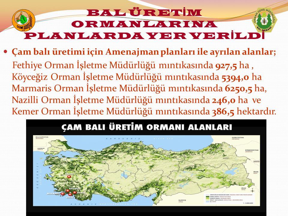 Çam balı üretimi için Amenajman planları ile ayrılan alanlar; Fethiye Orman İşletme Müdürlüğü mıntıkasında 927,5 ha, Köyceğiz Orman İşletme Müdürlüğü mıntıkasında 5394,0 ha Marmaris Orman İşletme Müdürlüğü mıntıkasında 6250,5 ha, Nazilli Orman İşletme Müdürlüğü mıntıkasında 246,0 ha ve Kemer Orman İşletme Müdürlüğü mıntıkasında 386,5 hektardır.