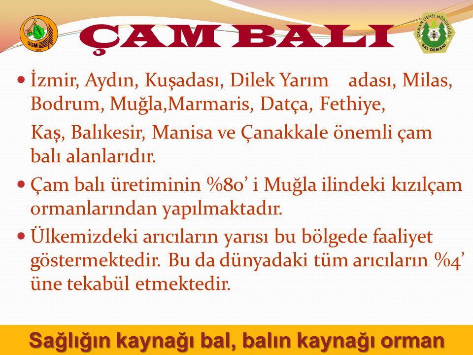 İzmir, Aydın, Kuşadası, Dilek Yarım adası, Milas, Bodrum, Muğla,Marmaris, Datça, Fethiye, Kaş, Balıkesir, Manisa ve Çanakkale önemli çam balı alanlarıdır.