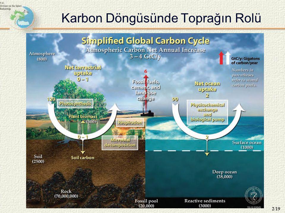 Toprakta Karbon Stoğunun Oluşumu 3/19 Toprak karbonunun asıl kaynağı ölü örtü ve köklerdir.