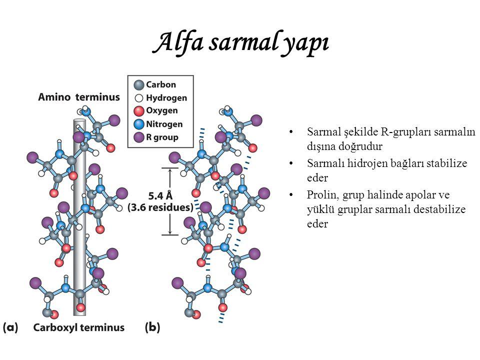 Alfa sarmal yapı Sarmal şekilde R-grupları sarmalın dışına doğrudur Sarmalı hidrojen bağları stabilize eder Prolin, grup halinde apolar ve yüklü gruplar sarmalı destabilize eder