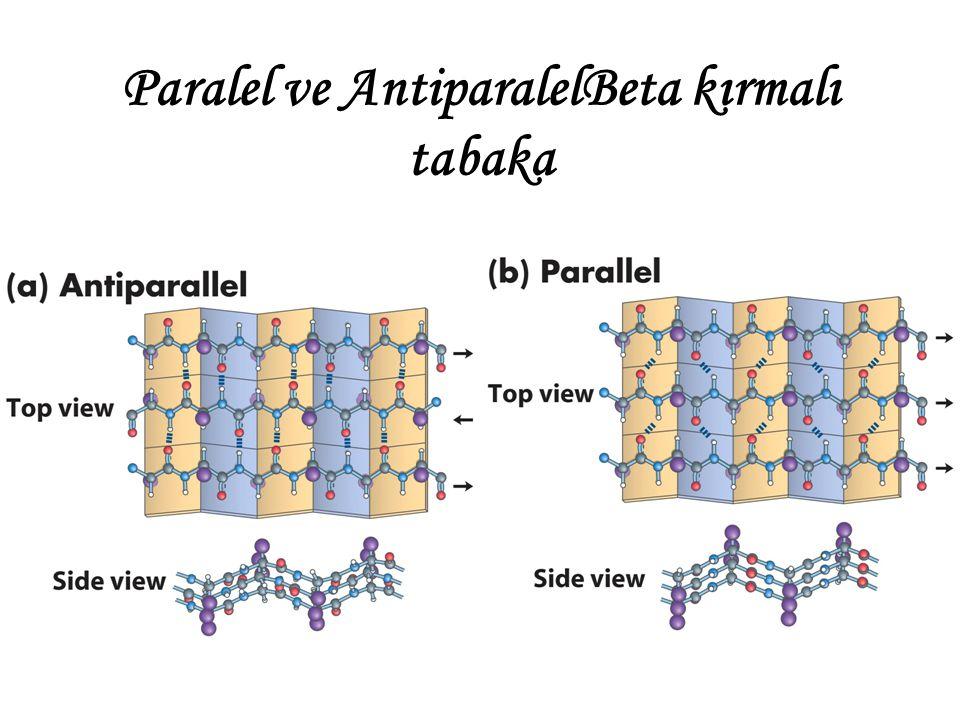Paralel ve AntiparalelBeta kırmalı tabaka