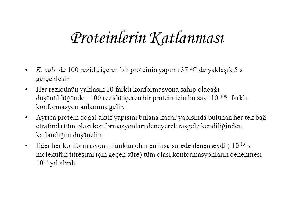 Proteinlerin Katlanması E. coli de 100 rezidü içeren bir proteinin yapımı 37 o C de yaklaşık 5 s gerçekleşir Her rezidünün yaklaşık 10 farklı konforma