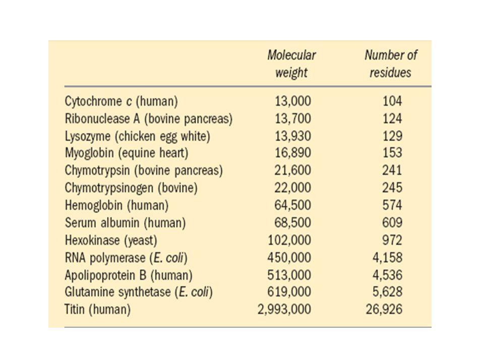 Proteinlerin sekonder yapısı Hidrojen bağlarının etkili olduğu yapılanmadır Alfa Sarmal Beta kırmalı Kollogen sarmal