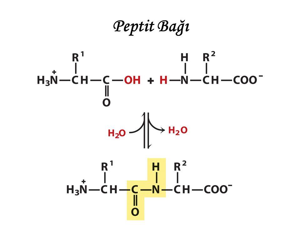 Peptit bağının özellikleri Peptit bağı sınırlı bir konfügrasyona sahiptir.