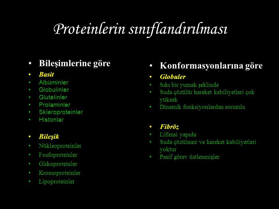 Proteinlerin sınıflandırılması Konformasyonlarına göre Globuler Sıkı bir yumak şeklinde Suda çözülür hareket kabiliyetleri çok yüksek Dinamik fonksiyonlardan sorumlu Fibröz Lifimsi yapıda Suda çözülmez ve hareket kabiliyetleri yoktur Pasif görev üstlenmişler Bileşimlerine göre Basit Albüminler Globulinler Glutelinler Prolaminler Skleroproteinler Histonlar Bileşik Nükleoproteinler Fosfoproteinler Glıkoproteinler Kromoproteinler Lipoproteinler