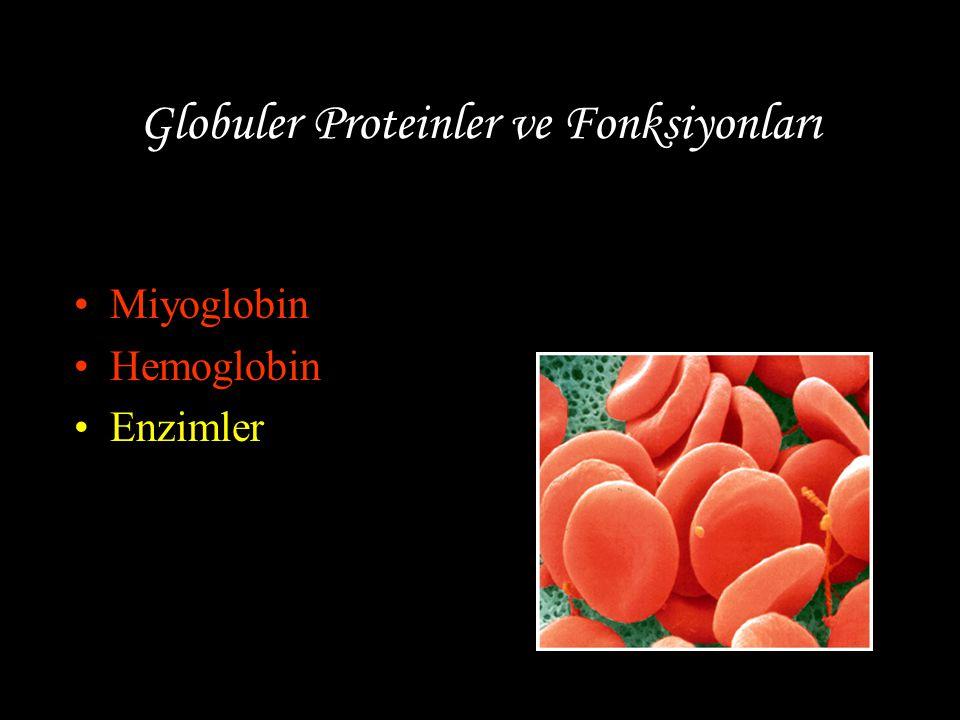 Globuler Proteinler ve Fonksiyonları Miyoglobin Hemoglobin Enzimler