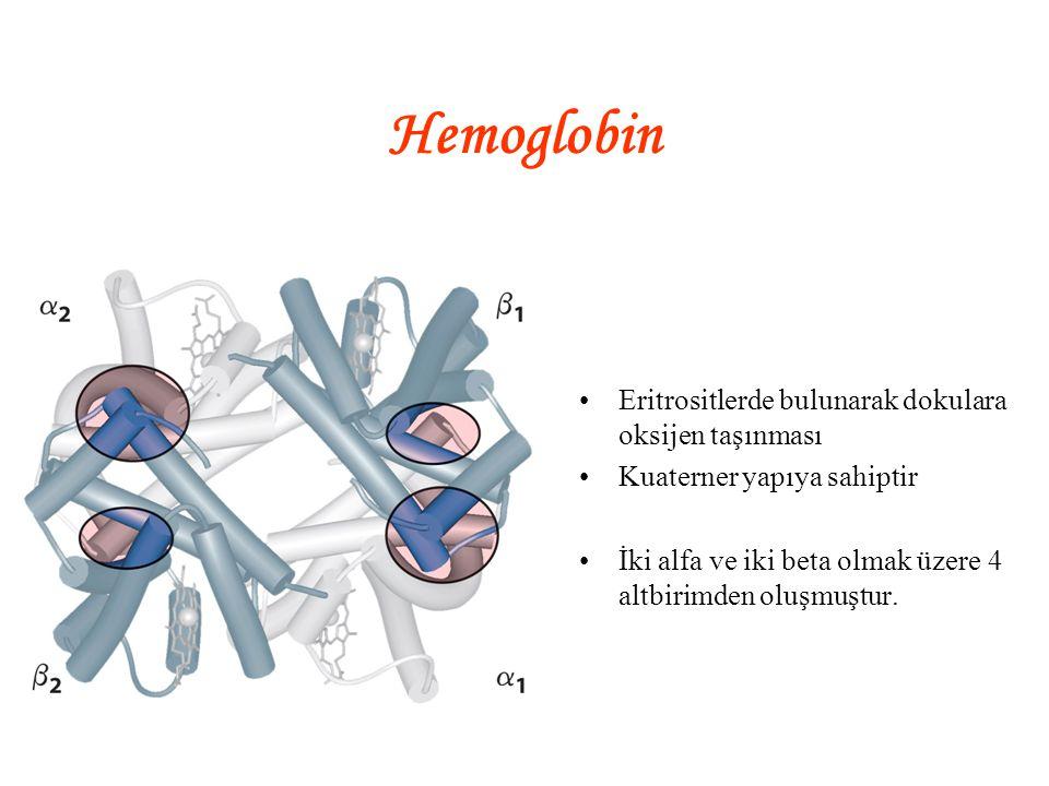Hemoglobin Eritrositlerde bulunarak dokulara oksijen taşınması Kuaterner yapıya sahiptir İki alfa ve iki beta olmak üzere 4 altbirimden oluşmuştur.