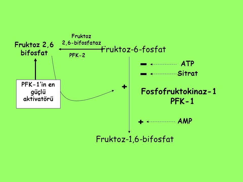 Fruktoz-6-fosfat Fruktoz-1,6-bifosfat Fosfofruktokinaz-1 PFK-1 Fruktoz 2,6 bifosfat PFK-2 + PFK-1'in en güçlü aktivatörü Fruktoz 2,6-bifosfataz ATP Si