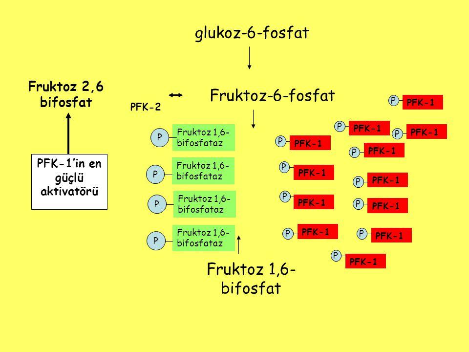 Fruktoz-6-fosfat Fruktoz 1,6- bifosfat PFK-1 Fruktoz 2,6 bifosfat PFK-2 PFK-1'in en güçlü aktivatörü Fruktoz 1,6- bifosfataz PFK-1 Fruktoz 1,6- bifosf