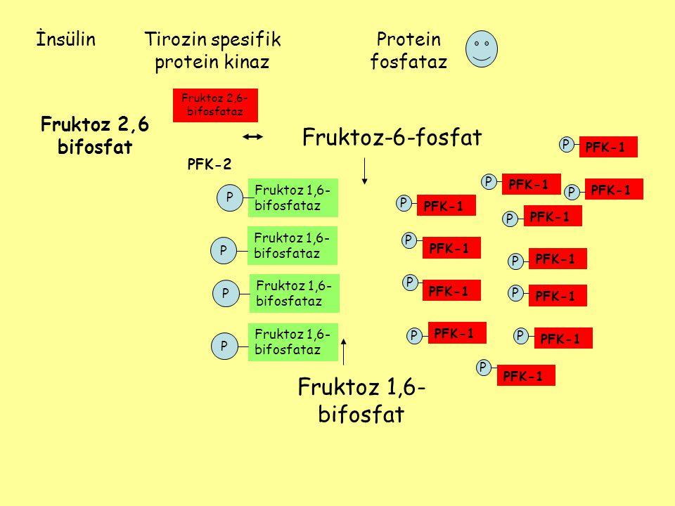Fruktoz-6-fosfat Fruktoz 1,6- bifosfat PFK-1 Fruktoz 2,6 bifosfat PFK-2 Fruktoz 1,6- bifosfataz PFK-1 Fruktoz 1,6- bifosfataz PPPP PPPPPPPPPPPP İnsüli