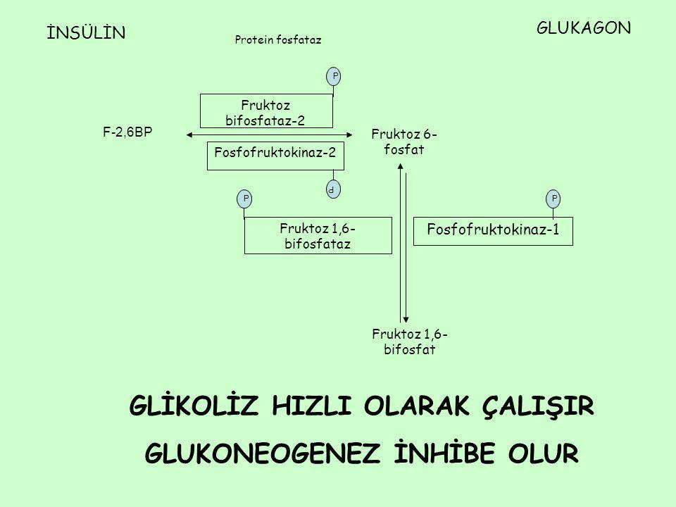 F-2,6BP Fruktoz 6- fosfat Fruktoz 1,6- bifosfat Fosfofruktokinaz-2 Fruktoz bifosfataz-2 Fosfofruktokinaz-1 Fruktoz 1,6- bifosfataz İNSÜLİN GLUKAGON Pr