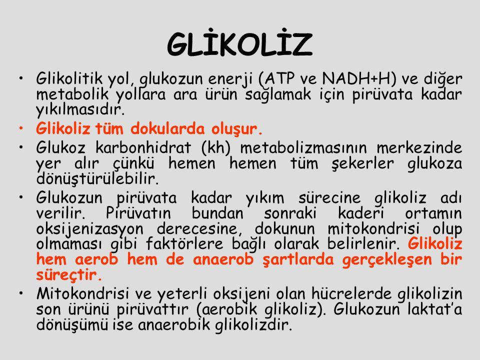 1.Kolaylaştırılmış difüzyon: GLUT: glukoz transporter kullanılır.
